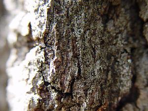 Tree bark at f/2
