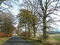 Trees By The Road - geograph.org.uk - 615445.jpg