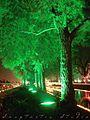 Trees in spring festival lahore.jpg