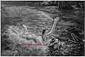 Trilok singh artist 1955 sohni.jpg