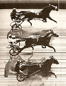 A Photo Finish Record Of The First Triple Dead Heat In Harness Racing