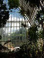 Tropical greenhouse in the Botanical Grden of València.JPG