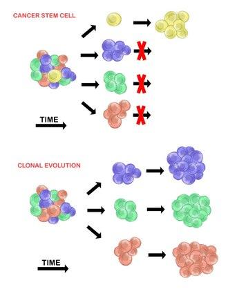 hva er tumor
