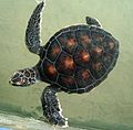 Turtle sanctuary - Flickr - gailhampshire.jpg