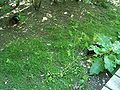 Two hidden squirrels.jpg