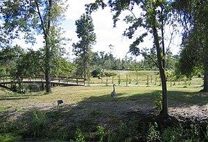 Arboretum of the University of Central Florida - Image: UCF Arboretum