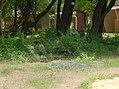 UNESCO Niokolo-Koba National Park Senegal (3687386596).jpg