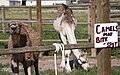 US-WY - Gleason - Sign - Road Trip - Chordata - Mammalia - Animalia (4892478226).jpg
