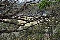 Unidentified trees in CRB (03).jpg