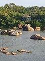 Unique Sri Lankan.jpg
