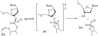Oligonucleotide synthesis - Wikipedia