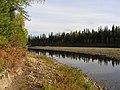 Urals forest.jpg