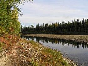 Bosques en los Urales