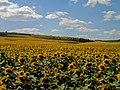 Valea Perjei, Moldova - panoramio (4).jpg