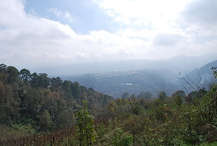 Pine forest near Huauchinango in the Sierra Norte ValleyNaupan05.JPG