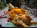 Vannes - aquarium (15).jpg