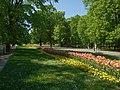 Varšava, Śródmieście, ogród Saski, tulipány.JPG