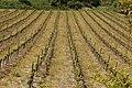 Vignoble des Côtes du Vivarais.jpg