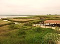 Vistes a la Bassa de l'Encanyissada des del mirador (Parc Natural Delta de l'Ebre).jpg