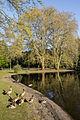 Volksgarten alte Bäume und See.jpg