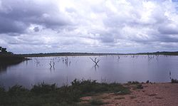 Volta-lake-ghosttree.jpg