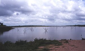 Volta-lake-ghosttree.jpg
