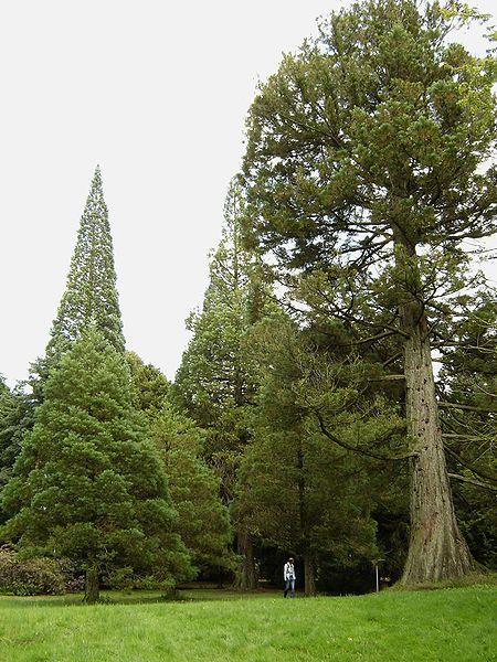 Arquivo: Von Gimborn Arboretum 2.jpg