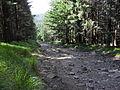 Vylet k Cernemu jezeru Sumava - 9.srpna 2010 249.JPG