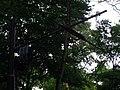 WS Waldstrecke Trennstelle 2012-08-09 CLP 01.jpg