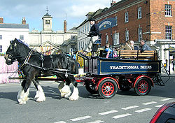 These Shire horses, here seen giving the public a ride, normally deliver Wadworth beer to pubs in the area.
