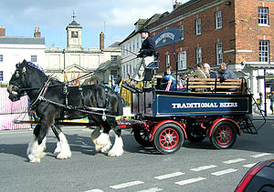 Draft horse - These Shire horses are used to pull a brewery dray delivering beer to pubs in England. In this picture, members of the public are being given a ride.