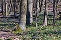 Wald-mit-Immergruen-JR-T20-0753-2020-03-28.jpg