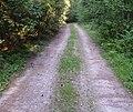 Waldweg bei Huppendorf 01.JPG