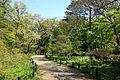 Walkway - Institute for Nature Study, Tokyo - DSC02117.JPG