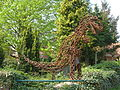 Wardenburg Dino.jpg