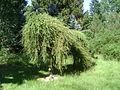 Warsaw. Powsin. Botanical Garden 197.JPG