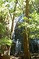 Waterfall in rainforest.jpg