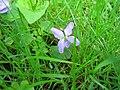 Weedflower.JPG