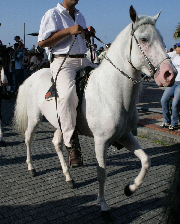 File White Horse With Black Skin Spots Img 1294 Jpg Wikimedia Commons