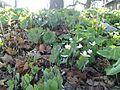 White flowers 1.jpg