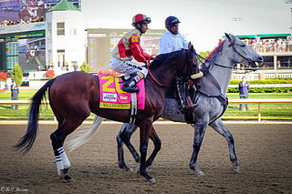 Wicked Strong American-bred Thoroughbred racehorse