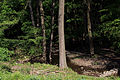Wien-Hietzing - Naturschutzgebiet 1 - Lainzer Tiergarten - Rotwassergraben.jpg