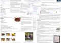Wikilivres patchwork.png