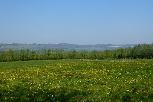 Wild Flower Meadow on Oldbury Hill