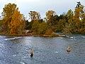 Willamette River in Eugene, Oregon (30332102903).jpg