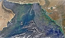 Phytoplankton bloom over the Arabian Sea