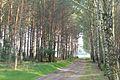 Wioska forests (5).JPG
