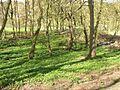 Wooded valley in Shibden Park, Halifax - geograph.org.uk - 162225.jpg