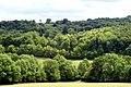 Woodland Near Polesden Lacey, Surrey - geograph.org.uk - 1394988.jpg
