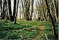 Woodland walk, Eggerness - geograph.org.uk - 263055.jpg